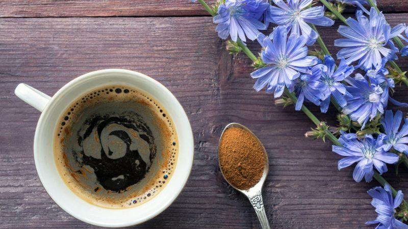 Cikorija je mnogima poznata kao izvrstan analog kave