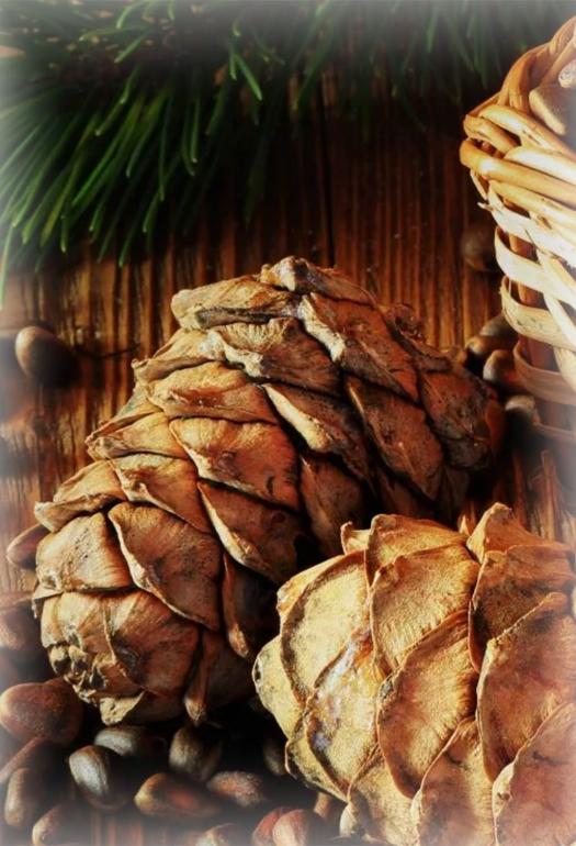 Cedar proizvodi – tajna sibirskog zdravlja!