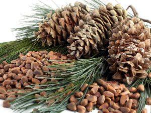 """""""BioCedar"""" jedinstveni prirodni pripravak konusa cedra"""