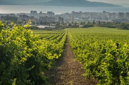 Po prvi puta u Hrvatskoj vina iz Rusije - vinarija «Myshako»